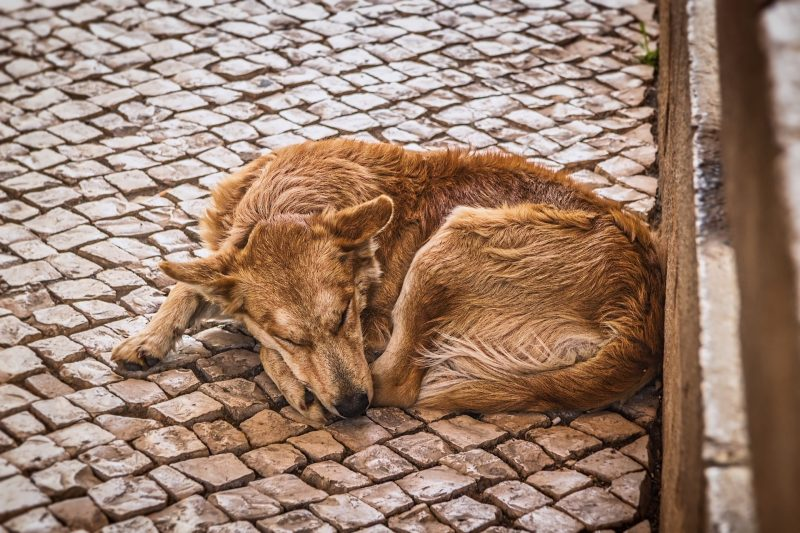 dog-3301348_1920