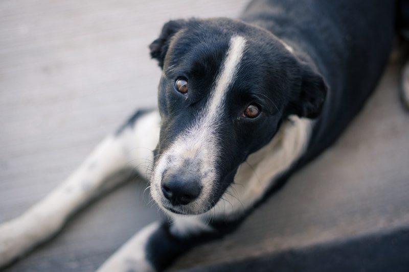 dog-2432579_1280